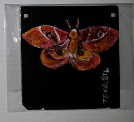 mariposanocturna